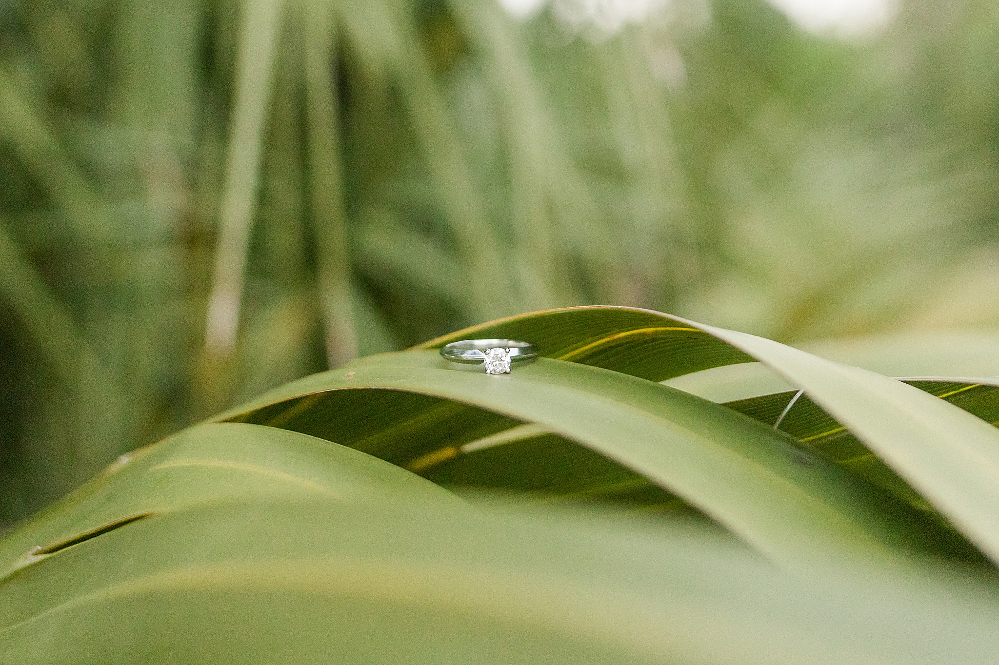 engagement ring rests on grass in Gulf State Park