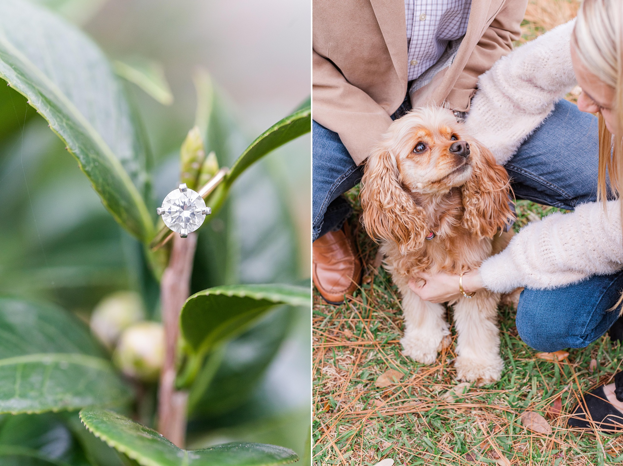 bride and groom pose with dog during AL engagement session