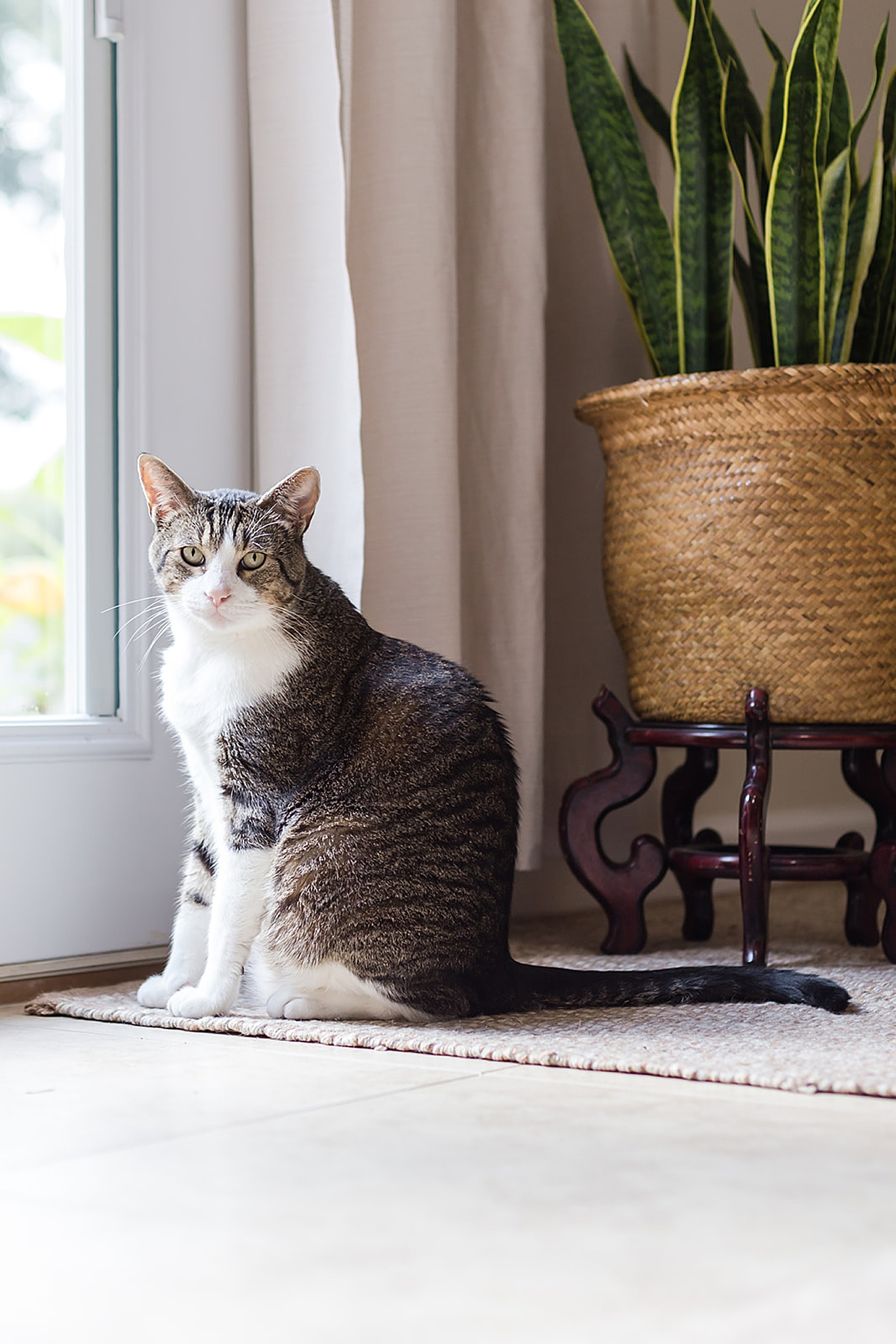 cat poses by window in home studio